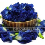 ปลูกดอกอัญชันตากแห้งขายปลูกง่ายราคาดีอาชีพอิสระที่น่าสนใจ