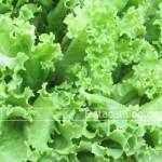 การปลูกผักไฮโดรโพนิกส์เป็นอาชีพเสริมที่น่าสนใจปลูกได้ทุกพื้นที่