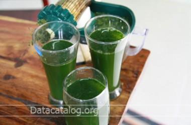 วิธีทำน้ำวีกราสประโยชน์ของน้ำวีกราส จากต้นอ่อนข้าวสาลี