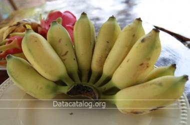 ประโยชน์ของกล้วยน้ำว้าเรื่องดีๆที่ควรรู้