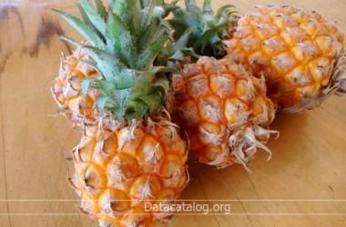 ปลูกสับปะรดอาชีพเสริมน่าลงทุน